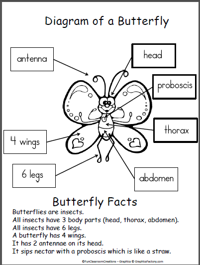 Free Butterfly Diagram Poster