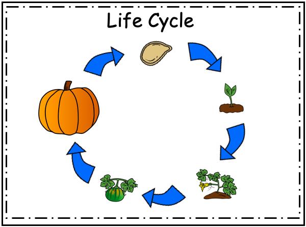 Free Kindergarten Pumpkin Book Life Cycle Madebyteachers