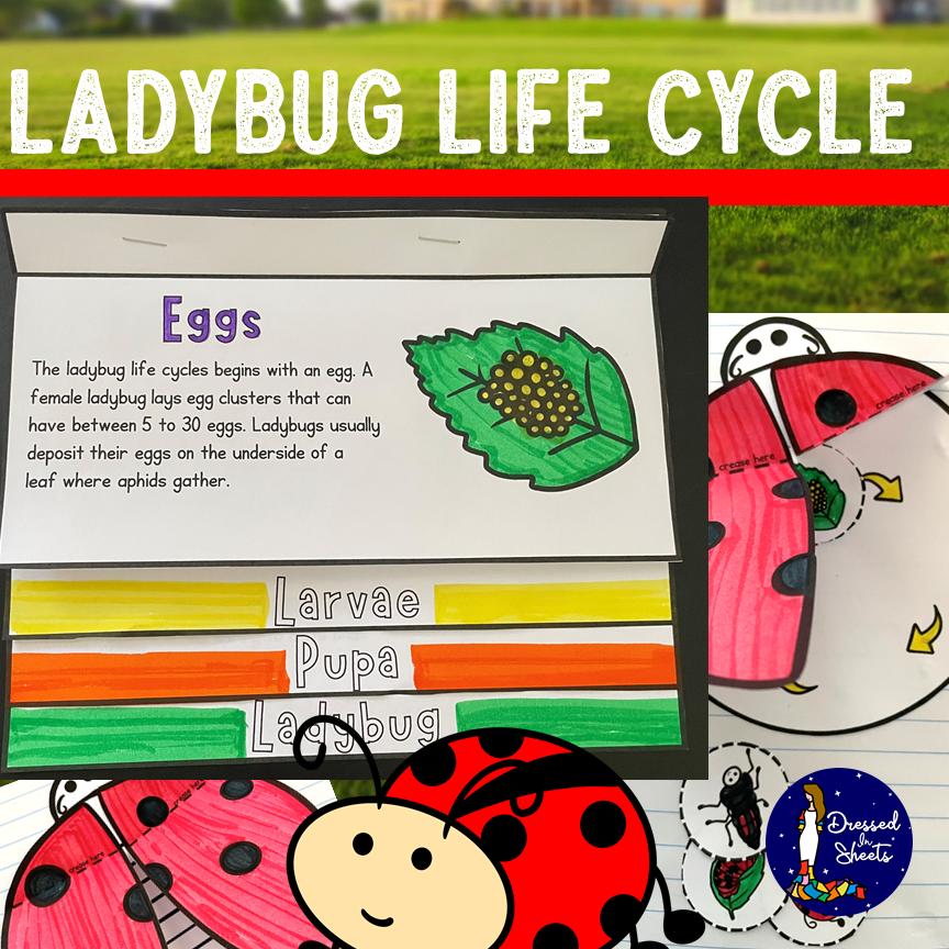 Ladybug Life Cycle Printable Activity