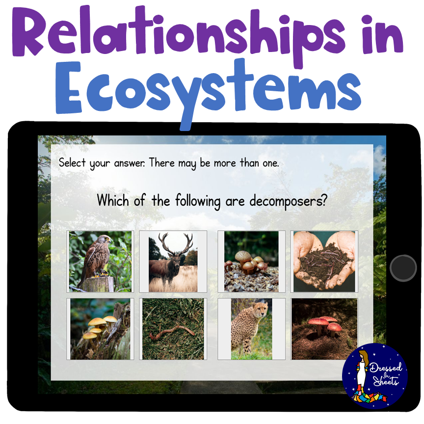 Ecosystems Boom Cards