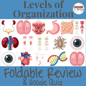 Biological Levels of Organization Foldable Review